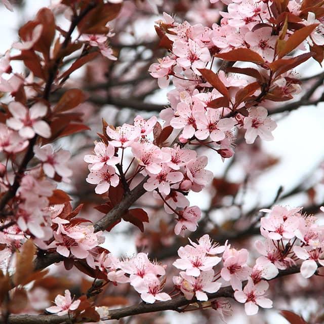 Sélection de parfums printemps